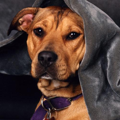 Pet Photography | Tasher Studio of Photography